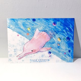 Ocean and the sea second season Chinese dolphin / double postcard