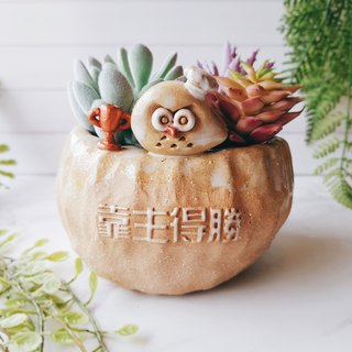 P-31 by the main victory Eagle ☆ Yoshino Hawk x owl gospel flower hand made pottery succulent healing unique