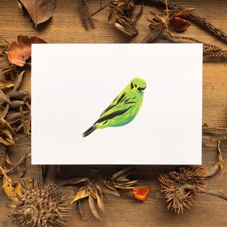 Birds and Birds Series Emerald Tangala Finch Postcard