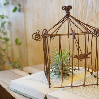 [Potted] Elf House Tillandsia's House (Air pineapple healing office small objects containing plants) Christmas Christmas gifts exchange gifts