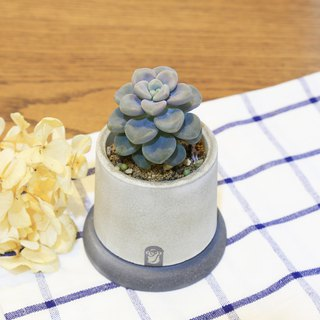 Small well Succulents Cactus Cement Hand-made potted plants Containing plants / Damocen Qiu Li / Allen