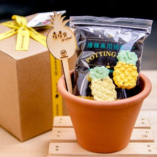 [New] Pineapple Grows Pineapple Seed Ball Planting Set