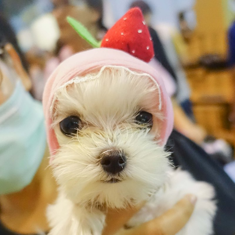 (Pink) Strawberry Taifu pet cats and dogs hat headdress * S number