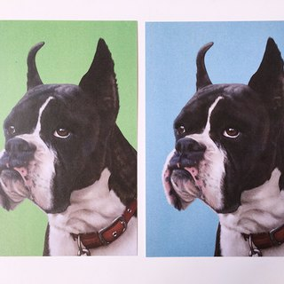 Animal illustration postcard (boxer dog) two colors optional