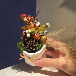 Mini dried flowers expand fragrant pot _ forget the forest
