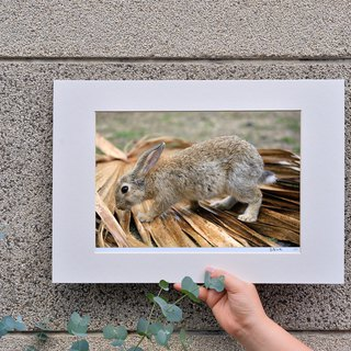 Limited Rabbit Photo Art Original - Survival