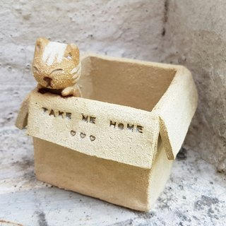 Carton Cat【Square box - Tabby】