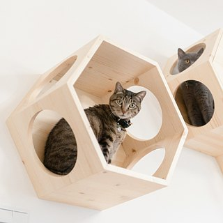 [MYZOO]BUSY CAT Hexagon Cat Jumping Platform