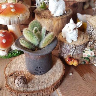 "A Magician Hat 3【S】【The series of "" Magician hat ""】(With Succulents)"