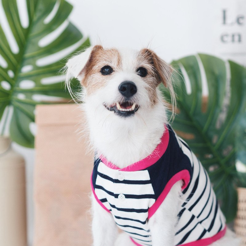 Dog Clothing - Quilted Blue Striped Tank