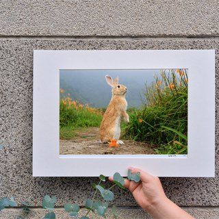 Limited rabbit photography art original - Wang You