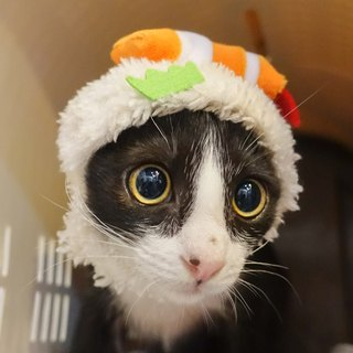 Shrimp Sushi pet cat dog hat caps *S