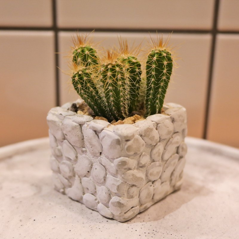 Peas succulents and small groceries - handmade clay pots with the creation of a series - small stone