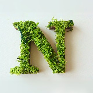 "Wooden alphabet objects (Moss) 5cm ""N"" × 1 point"