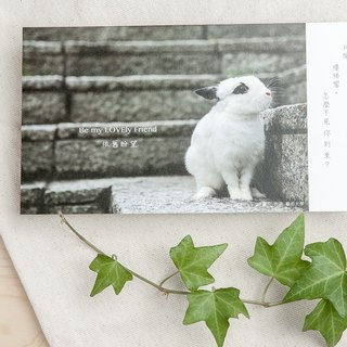 Rabbit Photography Illustration Postcard - Still Looking Forward
