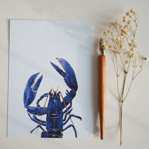 Postcard - Lobster