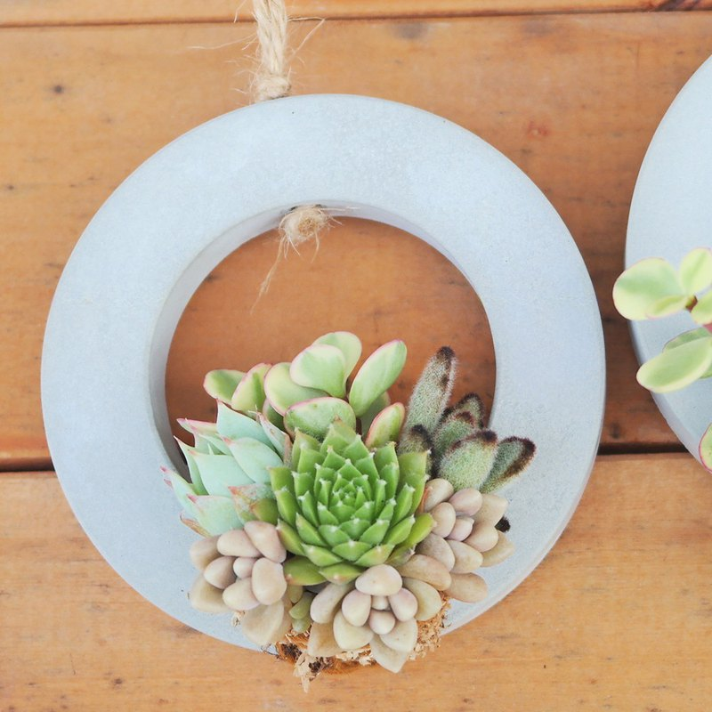 Peas succulents and small groceries_Creative planting series - Dirty inlay