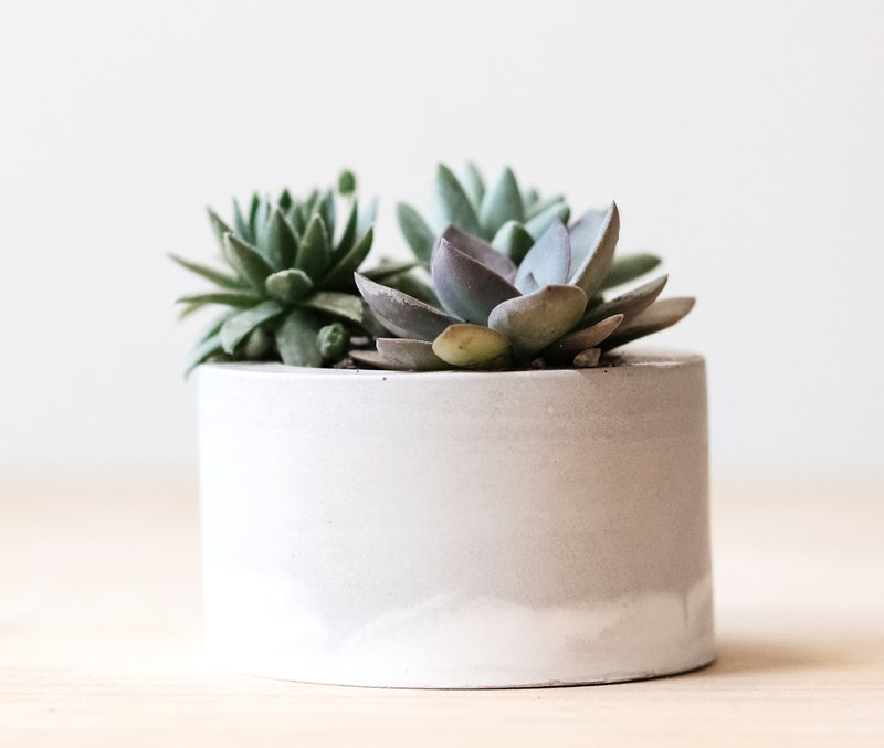 Gray-white cylindrical cement basin - succulent potted material package Succulents potted