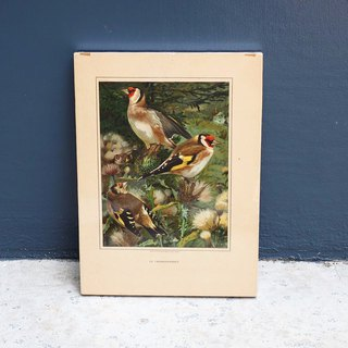 Early bird illustrations, frame wall paintings have been framed