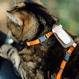 [Tail with me] classic nylon cat series chest strap warm orange