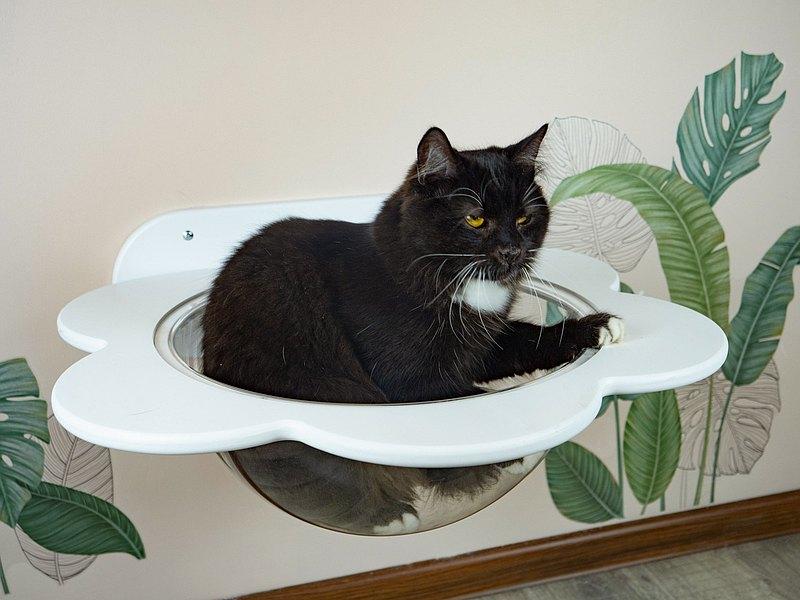 貓床白色貓屋貓架子貓家具