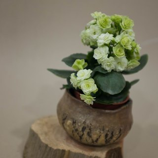 Life Pottery - Round Burst Bowl--Can be used as flower pot or bowl