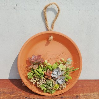 Beans and Succulents and Groceries _ Creative Plantings Series - To set the dish more meat