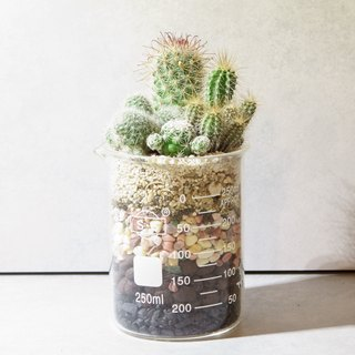 Micro King design -250ml beaker (fleshy cactus)