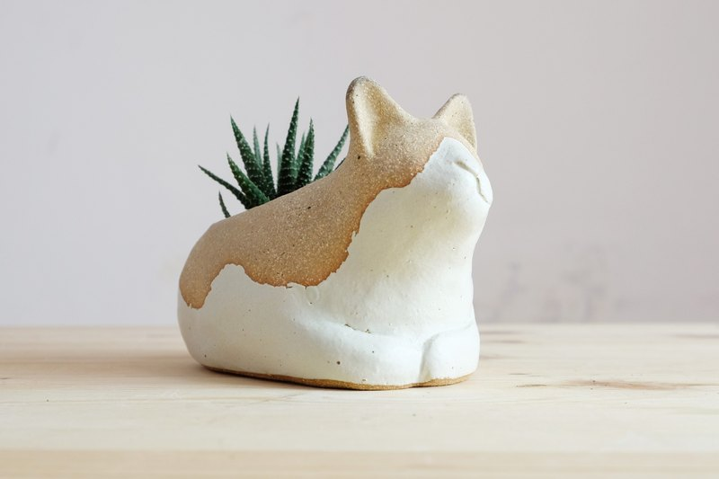 Aya-cat ceramic potted potted plants