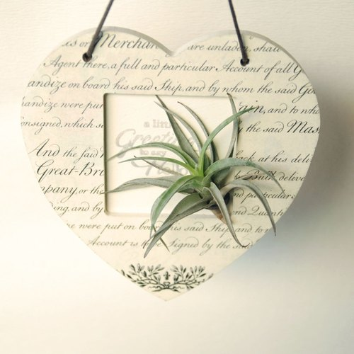 Christmas gift plants love box - Air pineapple / indoor full of elegant temperament / gift / birthday / new home / lover