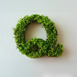 "Wooden alphabet objects (Moss) 5cm ""Q"" × 1 point"