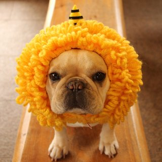 Dog wearing thing ☆ Hwanigan dog Tsuzura ☆ Dog wig 【yellow ogre】