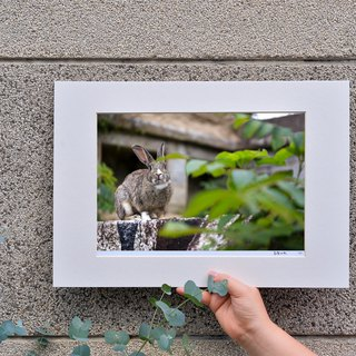 Limited rabbit photography art original - love