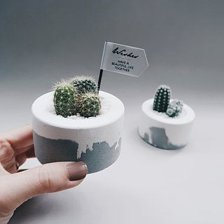 LITTLE CAKE Small Round Cake │ Cactus / Succulent Creamy Cement Pot (with plants)