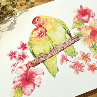 Postcard - sweet couple parrots
