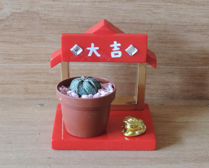 Healing Japanese house succulents [Golden 蟾蜍]