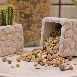 Natural flesh cactus medium-3 inch pots 2 cups loaded