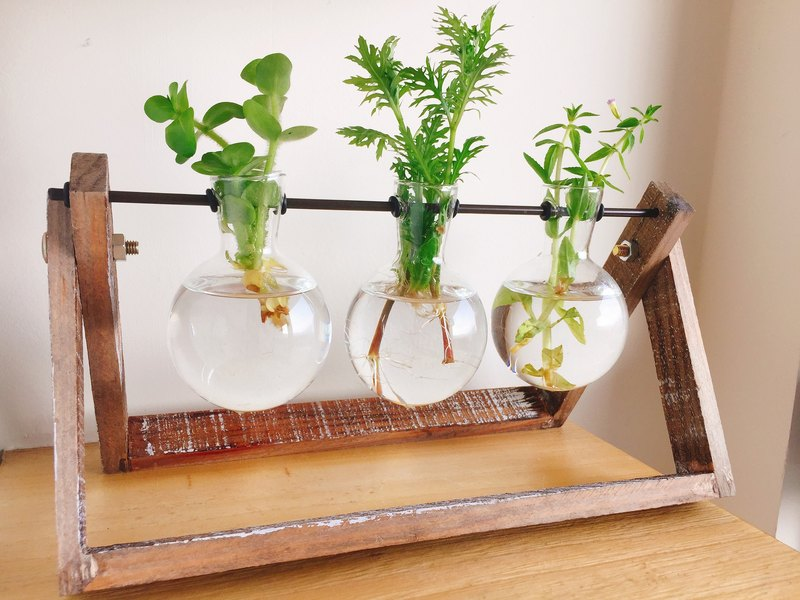 [Pure natural] DIY group of green trees glass bottles of aquatic plants potted plants feeding treatment of small things green landscaping