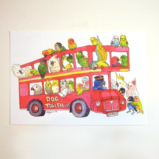 Parrot's daily - parrot bus illustration postcard