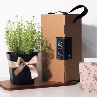 "Musk thyme _ vanilla potted ""gift section"""