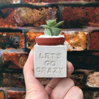 Let's go crazy crazy squat. Meaty magnet potted plants