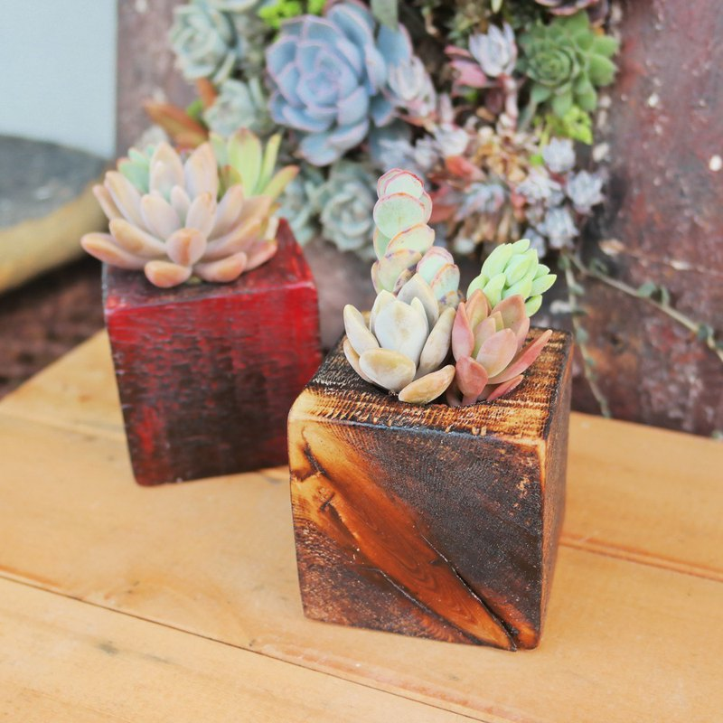 Peas Succulent Plant and Small Grocery - Nature Series - Wooden Planting and Planting