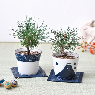 Saint Bartholomew X Barbapapa blue and white porcelain bonsai cultivation / Japanese black pine (two)