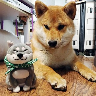 2016 warehouse new product big butt Shiba Inu doll / ornaments plush doll bag 袱 cloth pocket