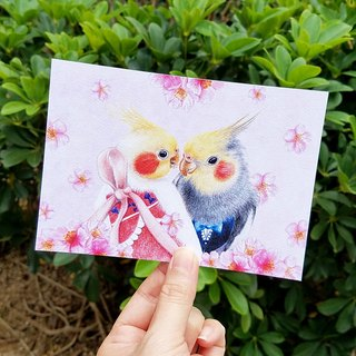 Postcard - Cockatoo with sakura