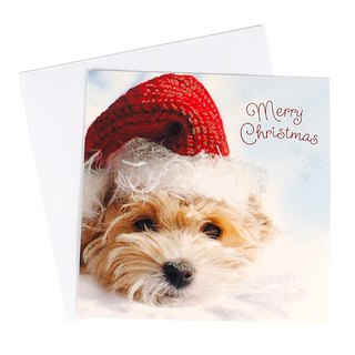 Cute dog Christmas hat Christmas box card 10 into [Hallmark-card Christmas series]
