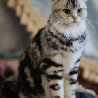 MINI'S SECRET ~ handmade wool felt special ordered a highly realistic simulation engraved cat