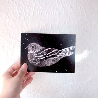 Nighthawk Hong Kong Birds Postcard
