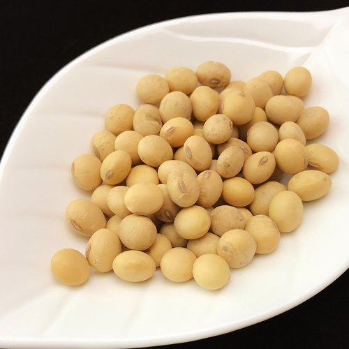 [This product of soybeans] non-genetically modified particles complete bean curd super concentrated homemade soy milk