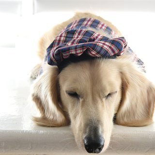 Handmade Elegant Tartan Pet Beret - French Look Outfit - Dog/Cat/Bunny【ZAZAZOO】